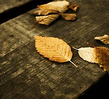 Autumn garden by trendism