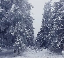snowy fir trees by psychoshadow