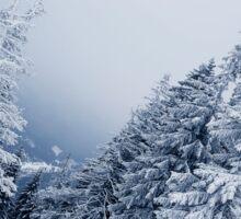 mountain fir Sticker