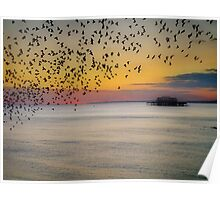 Starlings at Sunset Poster