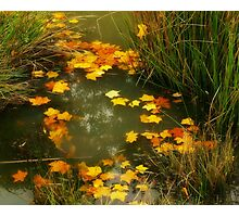 Golden Leaves Photographic Print