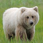 """""""Orphan Bear Cub! by jozi1"""