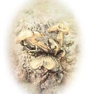 Mushroon and bark by thudjie