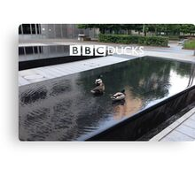 BBC Ducks Canvas Print