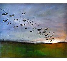 Bats and Splats Photographic Print