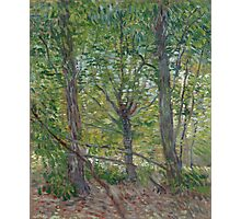 Vincent Van Gogh - Trees, July 1887 Photographic Print