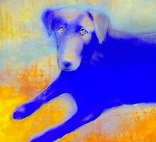 Dog In Blue And Yellow by art64