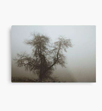 Fog and Branch Metal Print