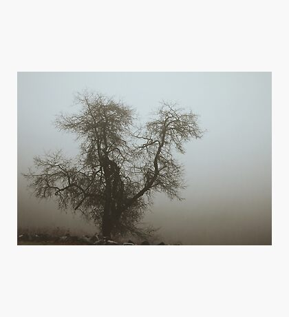 Fog and Branch Photographic Print