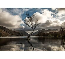 Llyn Padaarn's Lonely Tree  Photographic Print