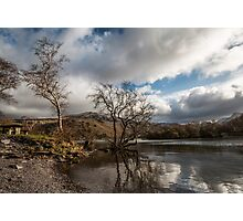 Llyn Padarn's other trees  Photographic Print