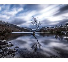 The Lonely Tree of LLyn Padarn  Photographic Print