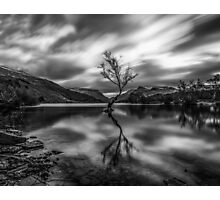 The Lonely Treaa in Monochrome  Photographic Print