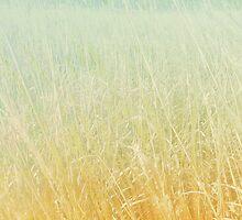 Tall Grass Prairie by art64