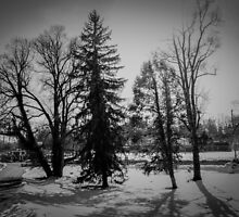 Dramatic trees in the snow by CSSphotos