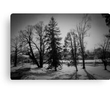 Dramatic trees in the snow Canvas Print