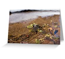 Leaves in a winter pond Greeting Card