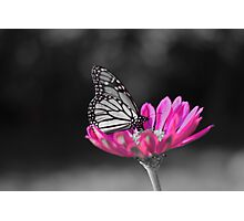 colorized butterfly  Photographic Print