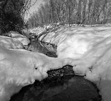 Snowy Pond by CSSphotos