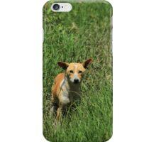 Dog in Tall Grass iPhone Case/Skin