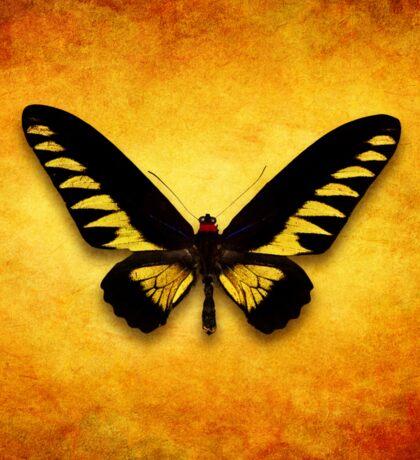 Trogonoptera Brookiana Sticker