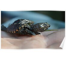 Baby Snapping Turtle #2 Poster