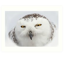 """Whooo goes there?"" - Snowy Owl Art Print"
