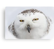"""Whooo goes there?"" - Snowy Owl Metal Print"