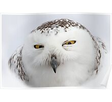 """""""Whooo goes there?"""" - Snowy Owl Poster"""