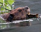 Beaver Working by WorldDesign