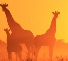 Giraffe - African Wildlife Background - Golden Sunset Bliss Sticker