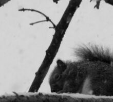 Squirrel in the Snow  Sticker