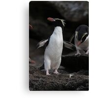 Yellow-Eyed Snare Penguin Canvas Print