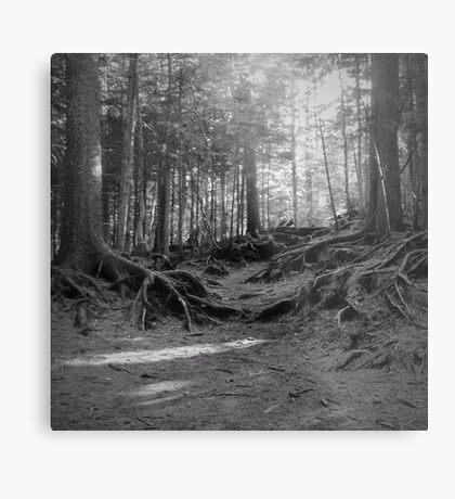 Grove Metal Print