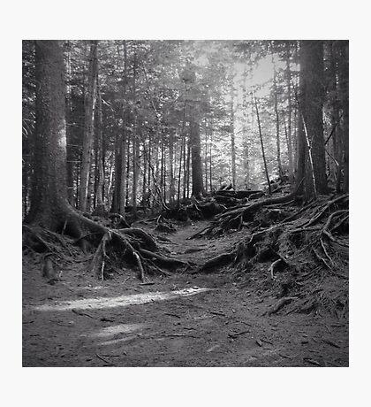 Grove Photographic Print