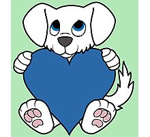 Valentine's Day White Dog with Blue Heart Photographic Print