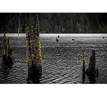 Lake Moss Photographic Print