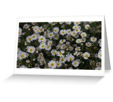 Daisies Floral Design  Greeting Card