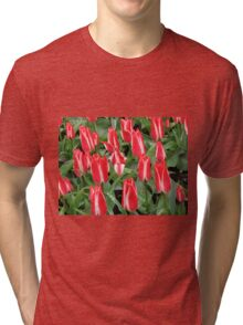 Pinnochios Galore! Colourful Tulips in the Keukenhof Tri-blend T-Shirt