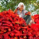Turkish Woman Preparing Red Peppers for Biber Salçası by taiche