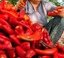 Turkish Woman Preparing Red Peppers for Biber Salçası Sticker