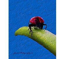 The End Of The Day   ( Ladybug Series ) Photographic Print