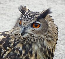 Chunk the Eagle Owl by Deb Vincent