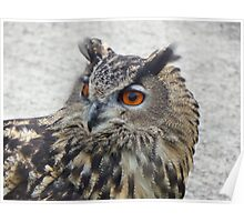 Chunk the Eagle Owl Poster