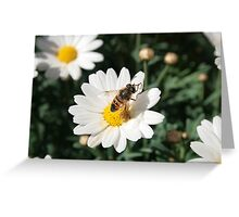 Bee Pollinating a Flower Greeting Card