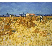Vincent Van Gogh - Corn Harvest in Provence, 1888 Photographic Print