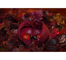 Ladybugs In Love: Home Photographic Print
