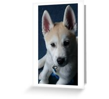 Nymeria the puppy dog Greeting Card