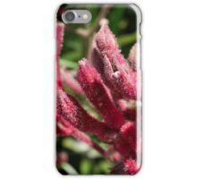 Kangaroo Paws - Pink iPhone Case/Skin