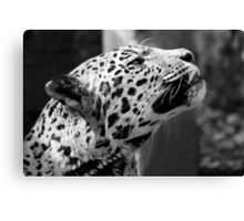 Leopard looking up Canvas Print